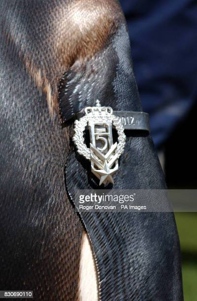 Twoyearold king penguin Nils Olav at Edinburgh Zoo parades his badge of office of Honoray Regimental Sergeant Major in front of The Royal Norwegian...