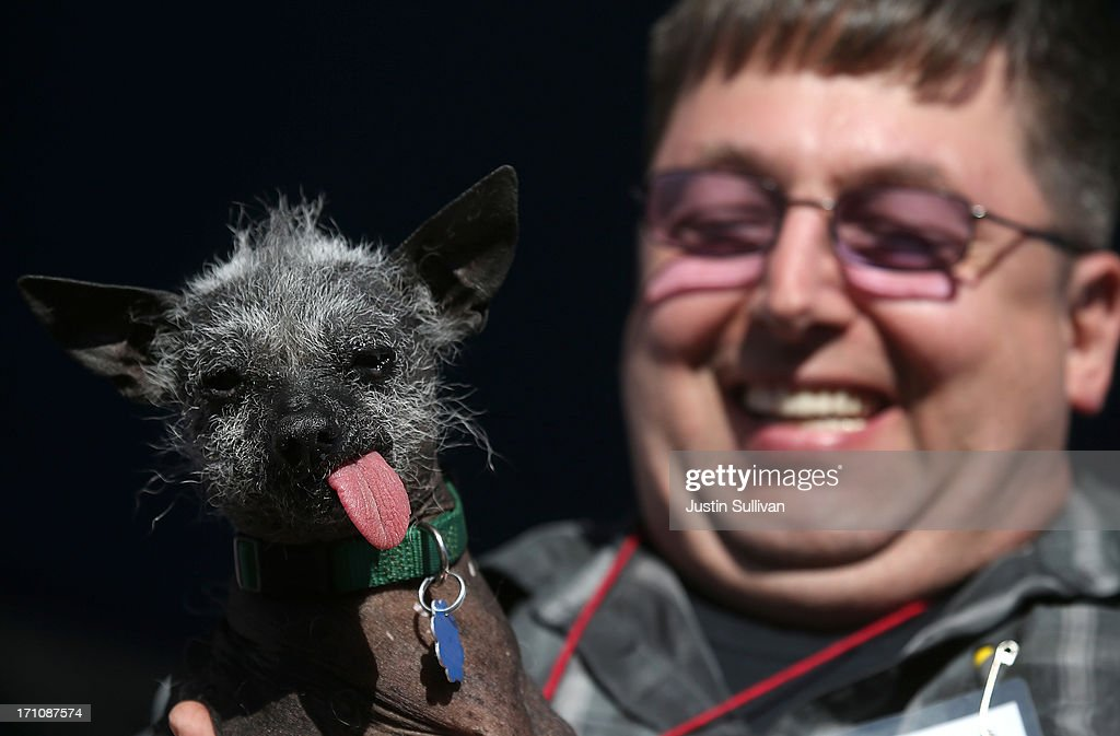 Ty Oppelt holds his dog Ellie Mae, a Chinese Crested, during the 25th annual World's Ugliest Dog contest at the Sonoma Marin Fair on June 21, 2013 in Petaluma, California. Walle, a basset and beagle mix won the honor of being the world's ugliest dog.