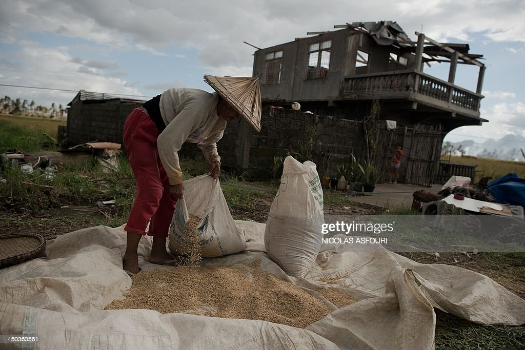 A typhoon victim lays out rice grains to be dried in Jaro on November 18, 2013. The United Nations has confirmed at least 4,500 killed in the disaster, which brought five-metre (16-foot) waves to Tacloban, flattening nearly everything in their path as they swept hundreds of metres across the low-lying land. AFP PHOTO/ Nicolas ASFOURI