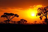 Typical african sunset with acacia trees in Masai Mara, Kenya
