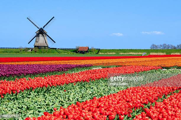 Typical Dutch Landscape in spring