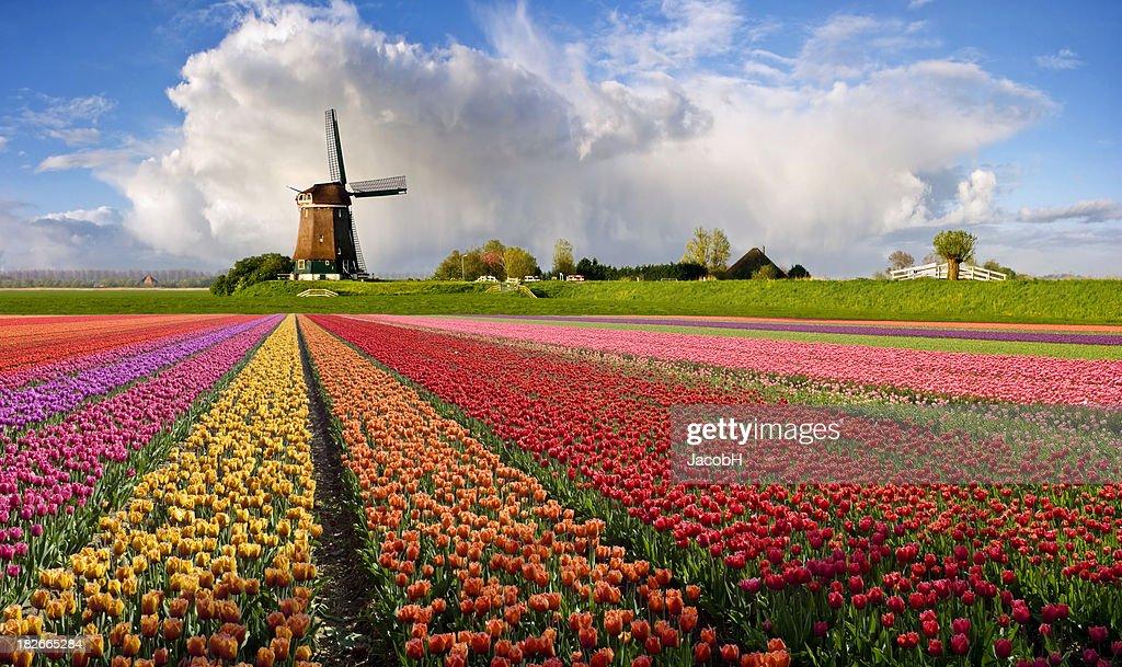 Typical Dutch Spring Landscape