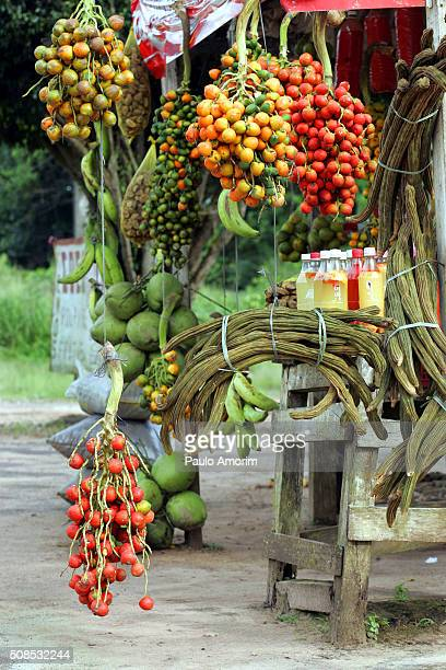 Typical fruits of the Amazon in Brazil