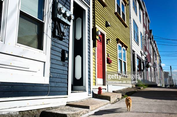 Typical 'Jelly Bean' houses in St John's Newfoundland Canada