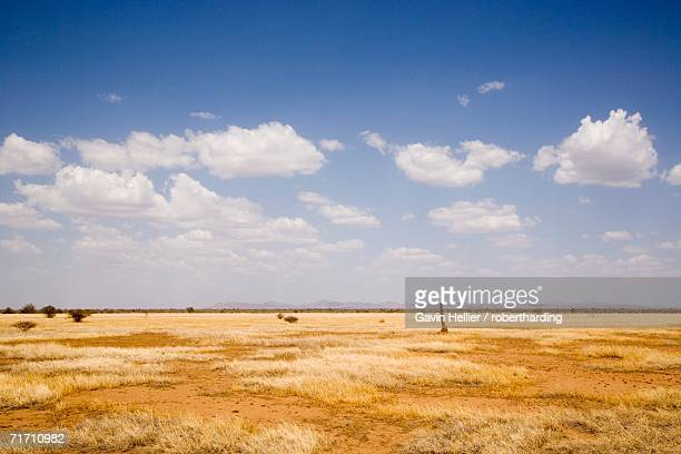 Typical landscape with termite mounds, Lower Omo Valley, Ethiopia, Africa