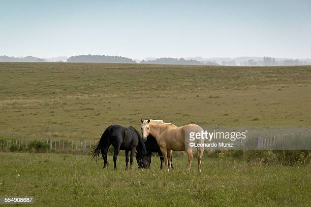 Typical view of the Uruguayan prairie
