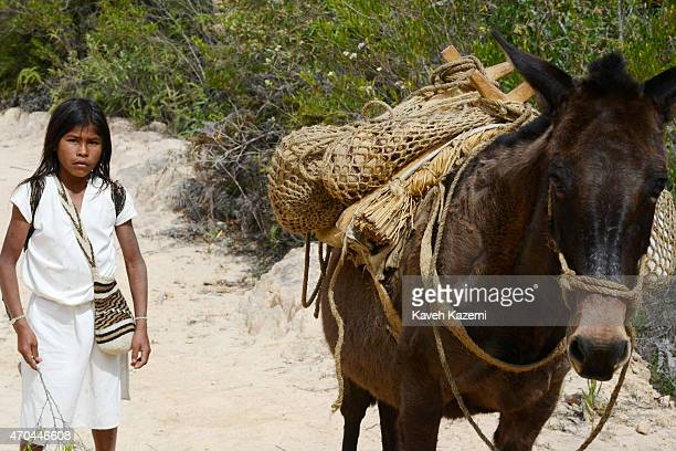 A typically dressed Arhuaco young boy seen with a mule on a dirt track road on January 23 2015 near Nabusimake Colombia The Arhuaco men appear in...