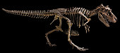 Tyrannosaurus Rex skeleton on isolated background .