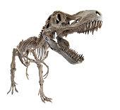 Tyrannosaurus rex skeleton isolated on white backgrond