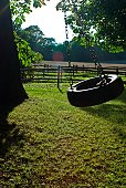 Tyre swing in sunlit paddock