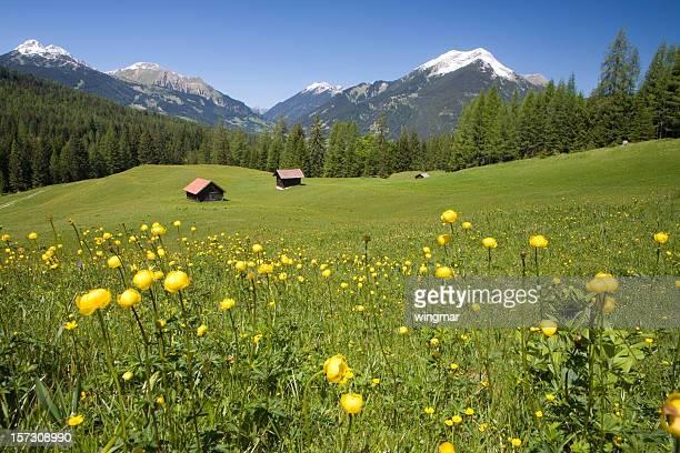 チロリアン夏の草地
