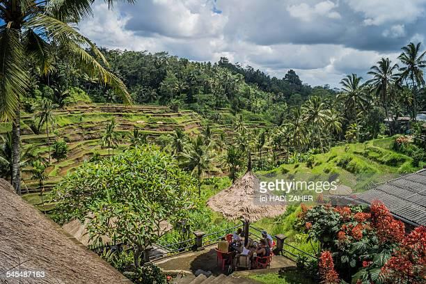 Ubud Rice Fields | Bali | Indonesia