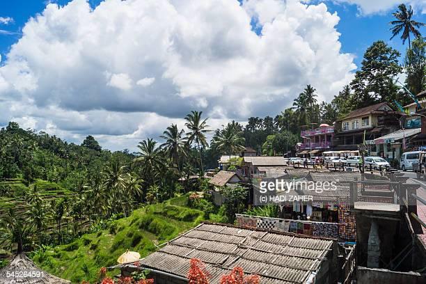 Ubud rice fields village