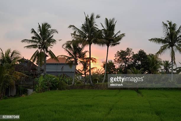 Ubud sunset