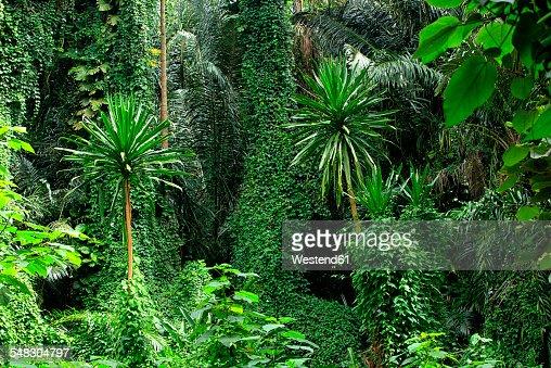Uganda, Bwindi Impenetrable National Park, Bwindi Impenetrable Forest