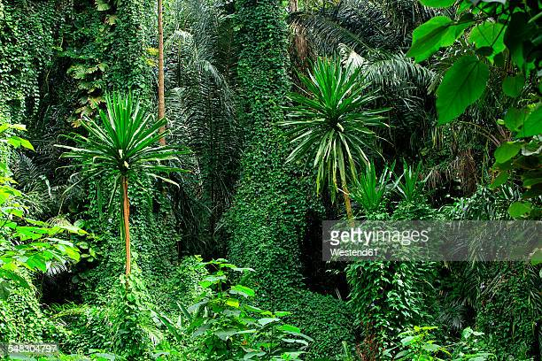 Uganda, Bwindi Impenetrable National Park, Bwindi Impenetrable Forest