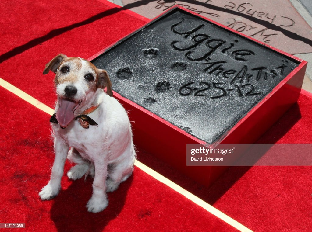 Uggie, the dog from 'The Artist', is immortalized with a hand and paw print ceremony at Grauman's Chinese Theatre on June 25, 2012 in Hollywood, California.