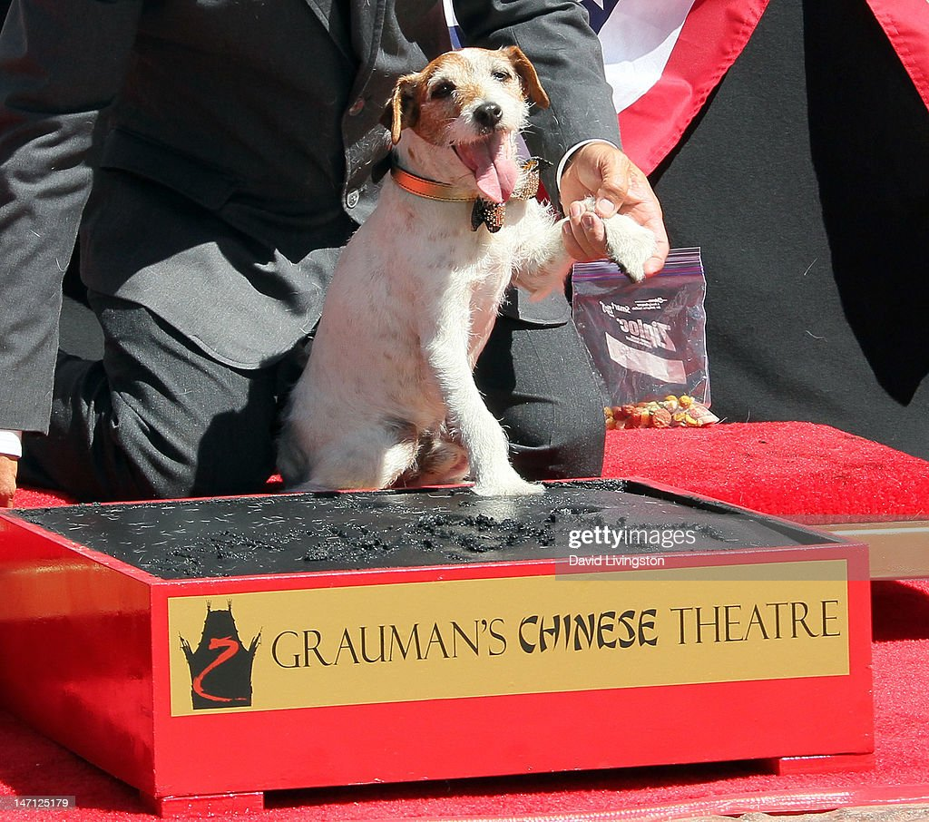 Uggie, the dog from 'The Artist' which won an Academy Award for Best Picture, is immortalized with a hand and paw print ceremony at Grauman's Chinese Theatre on June 25, 2012 in Hollywood, California.
