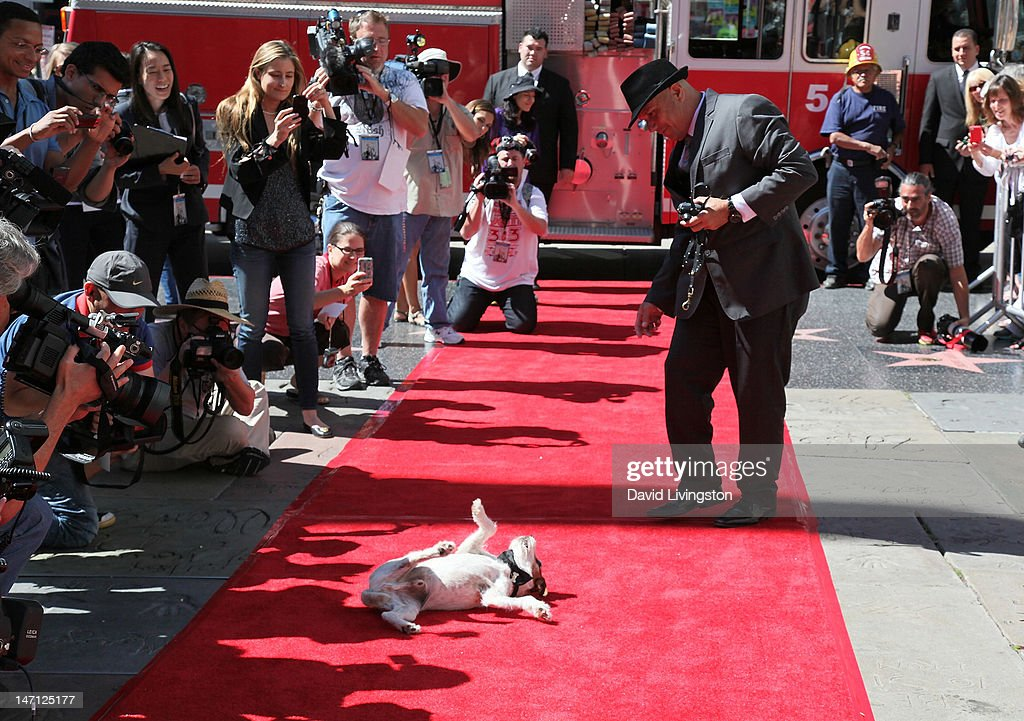Uggie, the dog from 'The Artist' which won an Academy Award for Best Picture with owner/trainer Omar von Muller, is immortalized with a hand and paw print ceremony at Grauman's Chinese Theatre on June 25, 2012 in Hollywood, California.