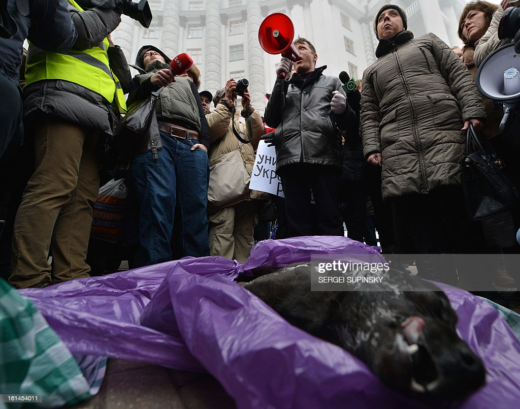 Ukrainian animals rights organizations activists gather next to the body of a dead dog, one of many stray dogs which have been poisoned by the communal services, they brought as they take part in a demonstration on February 11, 2013 in front of the Cabinet of the Ministers in Kiev, in protest against the allegedly poisoning of stray dogs. AFP PHOTO / SERGEI SUPINSKY