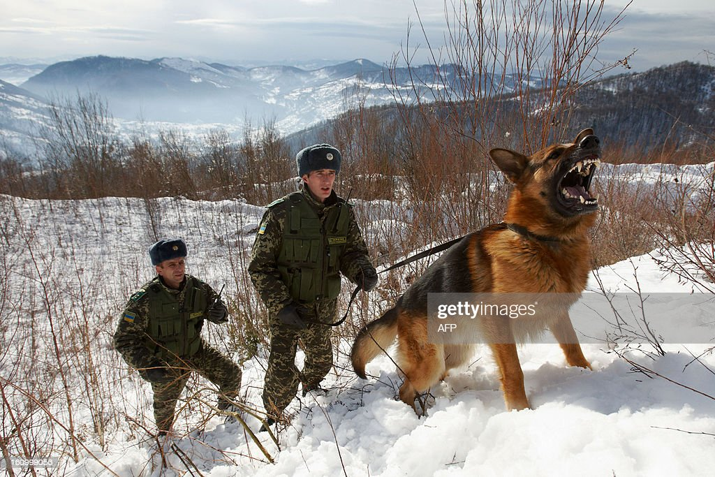 Ukrainian border guards and their dog patrol the Ukraine-Romanian border in the Zakarpattia region, some 200kms from the western city of Uzhgorod on February, 7, 2013. Ukrainian border guards detained 1900 people who were trying to cross the country borders illegally in 2012, and confiscated 653 pieces of weapons and about 107 kilograms of drugs.