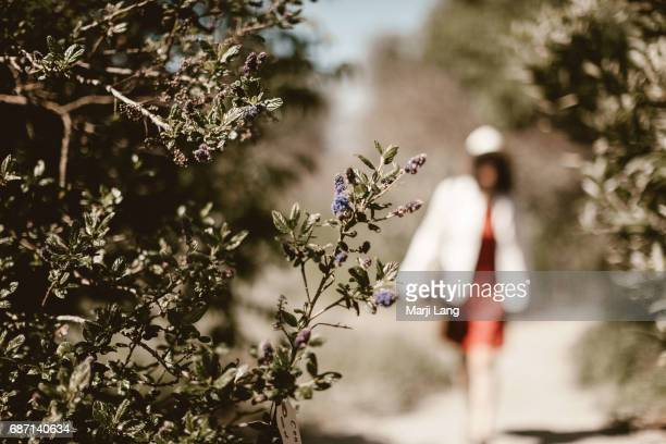 Ulistac natural area Santa Clara USA