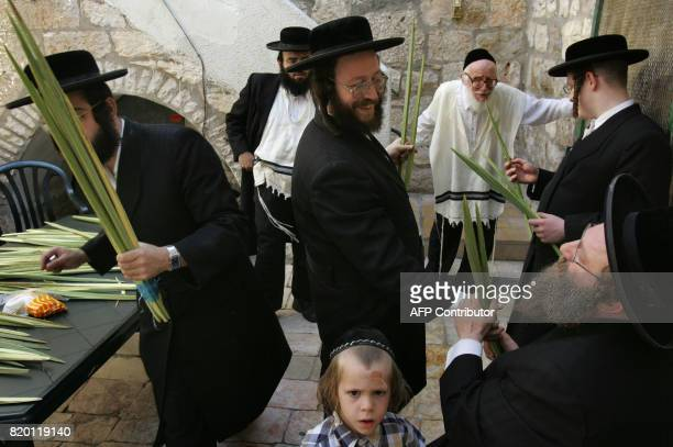 Ultra Orthodox Jewish men check the Lulav one of four species to be used during the celebration of Sukkoth the feast of the Tabernacles in the Ultra...