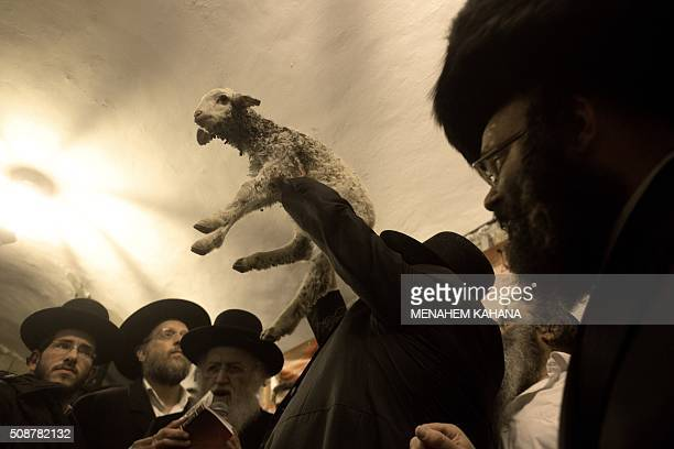 Ultra Orthodox Jewish rabbi lift the lamb during the 'Redemption of the First Born Donkey' or in Hebrew ' Petter Chamor ' ceremony in in the King...