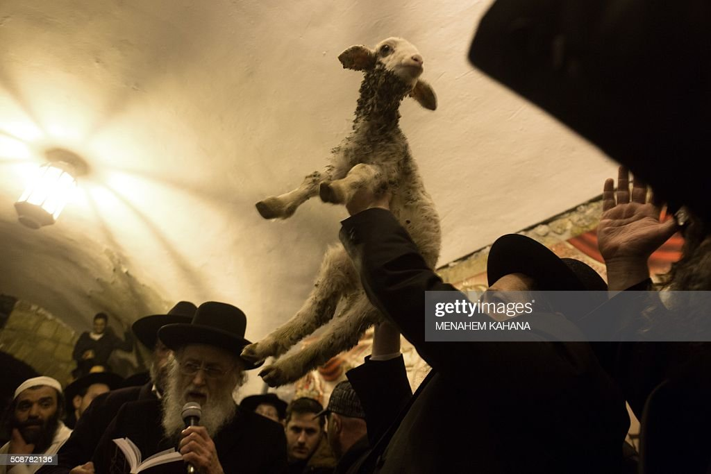Ultra Orthodox Jewish rabbi lift the lamb during the 'Redemption of the First Born Donkey' or in Hebrew ' Petter Chamor ' ceremony in in the King David tomb compound in mount Zion, outside the walls of the old city of Jerusalem,on February 6, 2016. The tradition of the 'Redemption of the First Born Donkey' is part of the 613 laws commemorated in the Jewish Bible. / AFP / MENAHEM KAHANA