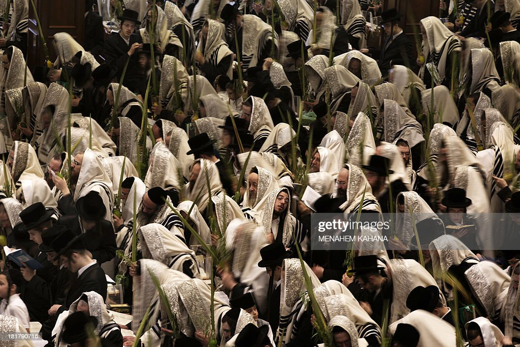 Ultra-Orthodox Jews of the Belz Hasidic Dynasty hold the four plant species: the Lulav (palm leave stalk), the Etrog (citrus), the Hadas (myrtle) and the Arava (willow-branches), as they pray during the last day of Sukkot, or the feast of the Tabernacles, at their synagogue in Jerusalem on September 25 , 2013. Thousands of Jews make the week-long pilgrimage to Jerusalem during Sukkot, which commemorates the desert wanderings of the Israelites after their exodus from Egypt.