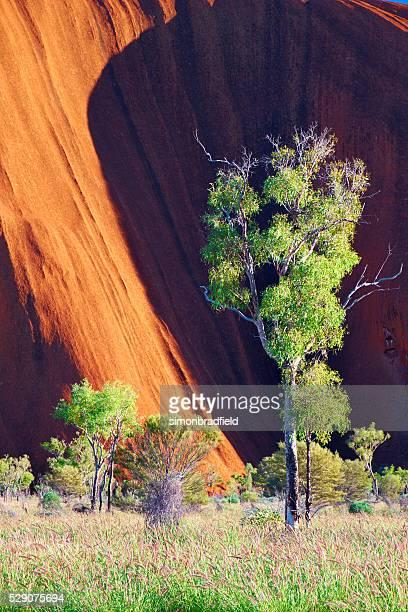 Uluru Scenic