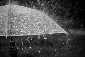 Splashing water on umbrella in the rain in black and white color tone