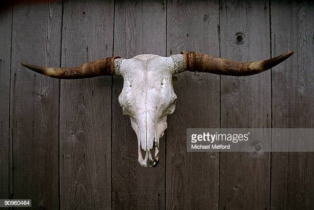 A cattle skull with horns hangs on a wooden wall.