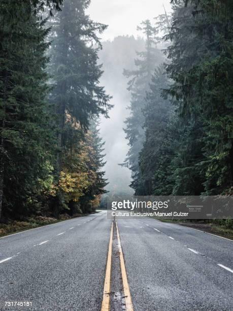Umpqua National Forest highway and mist, Oregon, USA