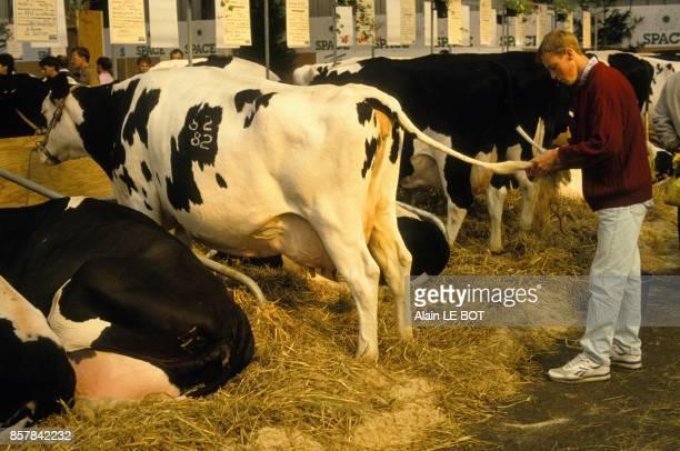 Un agriculteur et ses vaches au salon SPACE de la production animale baptise Space le 16 septembre 1993 a Rennes France