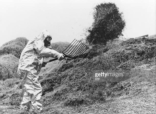 un agriculteur suédois portant une combinaison antiatomique déplace en juin 1986 du fourrage contaminé par le nuage radioactif de Tchernobyl quelques...
