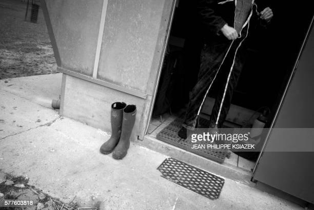 'LES AVICULTEURS DE LA DOMBES NE PLAISANTENT PAS AVEC L'HYGIENE' Un aviculteur enfile une combinaison sanitaire le 01 février 2007 à La Boisse avant...