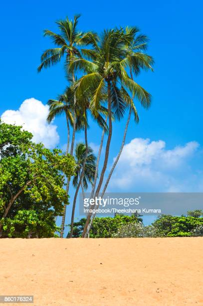 Unawatuna Beach with Coconut Trees