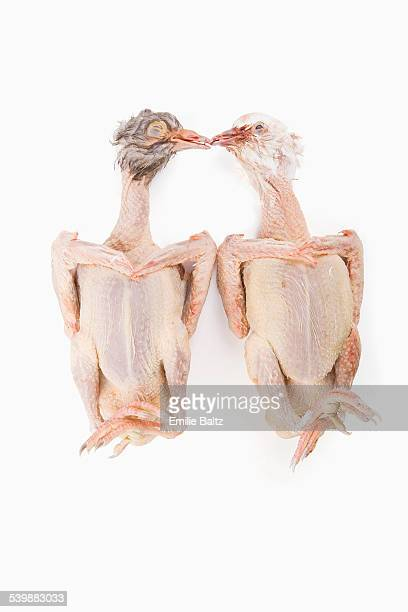Uncooked whole chickens kissing against white background