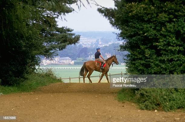 Horse training Mandatory Credit Pascal Rondeau/Allsport