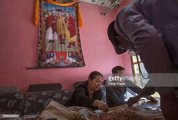 Under a picture of exiled Tibetan spiritual leader the Dalai Lama Chinese buyers examine cordycep fungus at a market on May 242016 on the Tibetan...