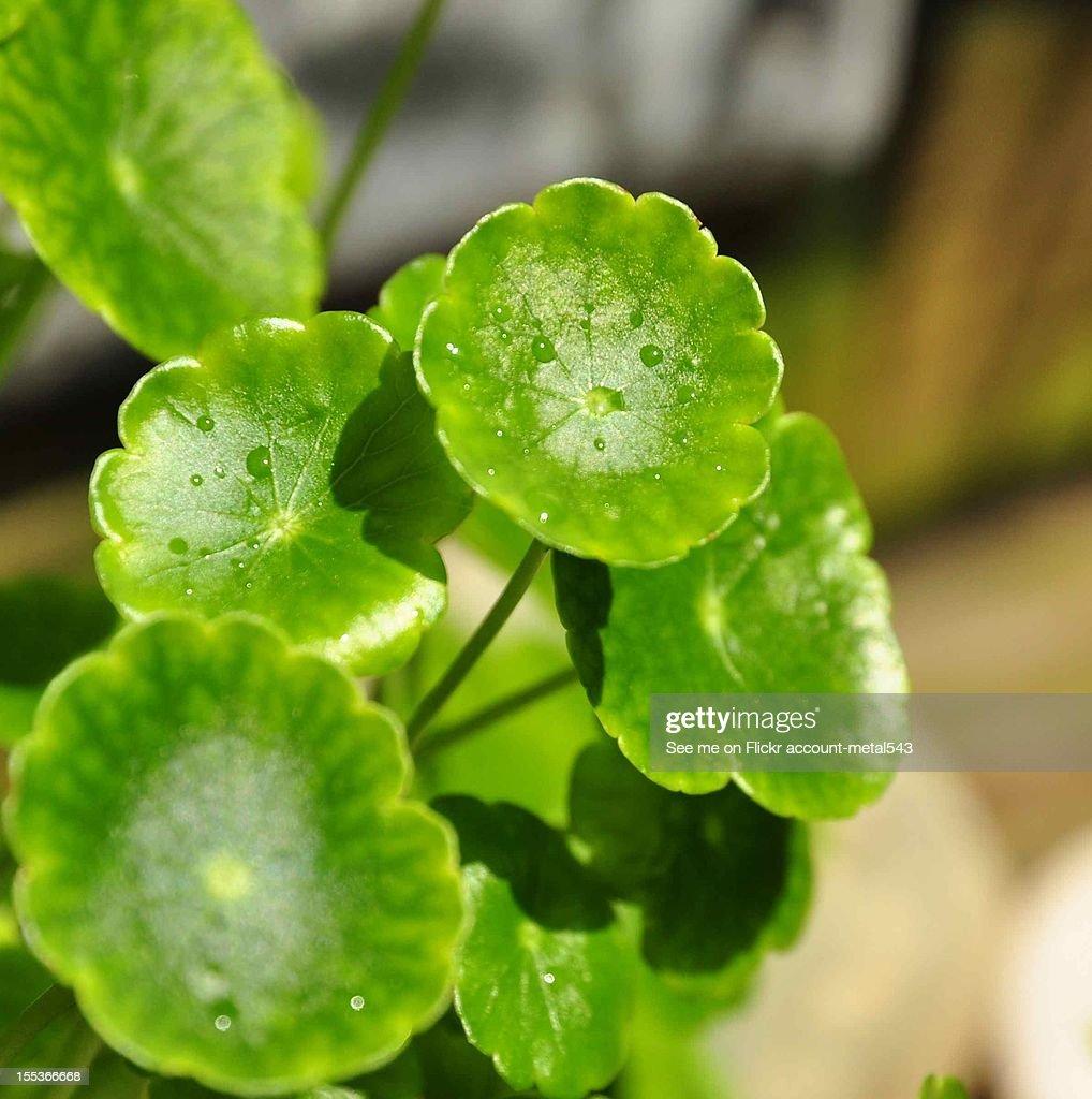 Under my green umbrella : Stock Photo