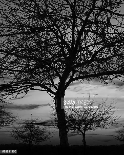 Under the Apple Tree
