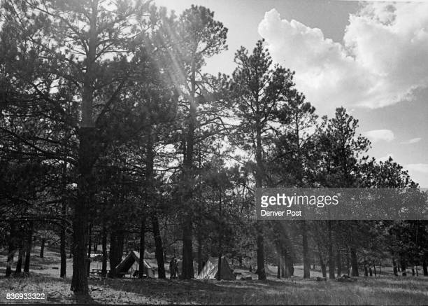 Under the large trees of the Black Forest area near Elbert a group of tents marks one of the campsites on the Boy Scouts new ranch at Peaceful Valley...