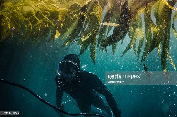 Under the sea of kelp