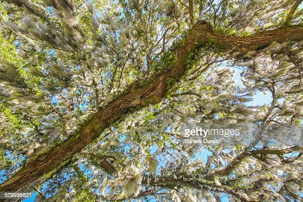 Under the Spanish Moss