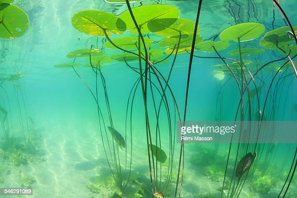 Water Plant Stock Photos And Pictures Getty Images
