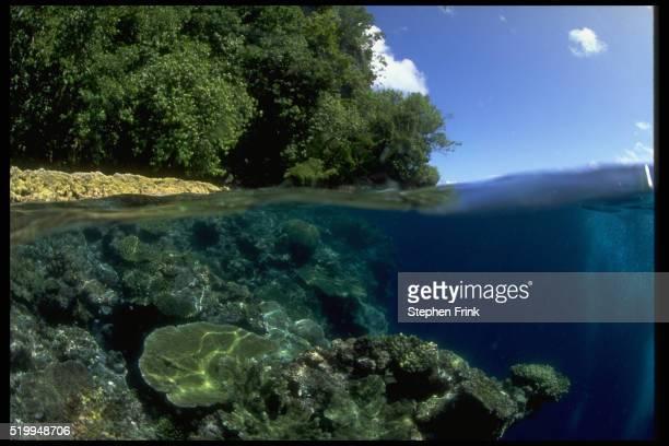 Undersea Shore of the Solomons