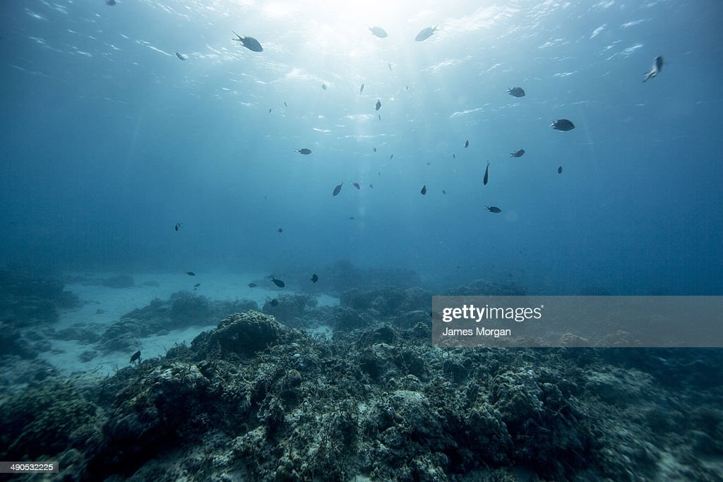 Undersea view of fish with sunlight