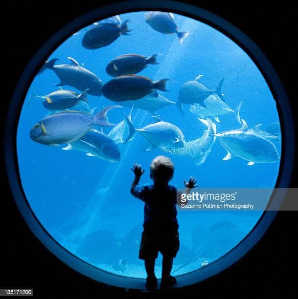Underwater awe